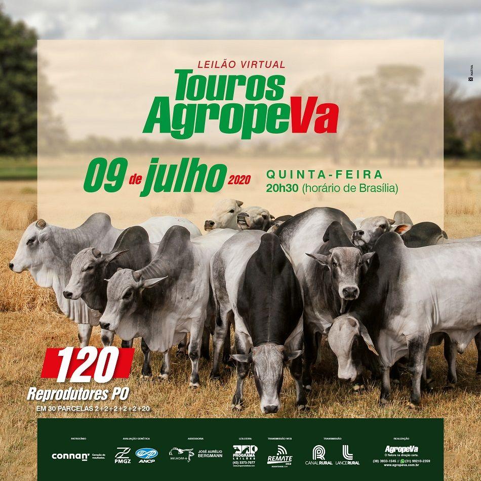 Leilão Touros 2020