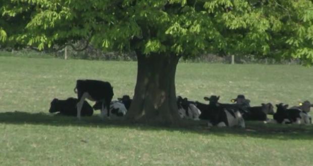 Manual de boas práticas de manejo e conforto para vacas em lactação