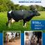 Vacas campeãs do torneio leiteiro de Taubaté têm genética CRV Lagoa