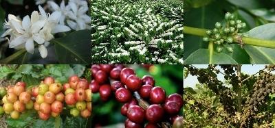 desenvolvimento-fruto.jpg