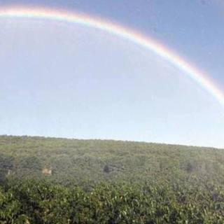 plantacao-com-arco-iris.jpg
