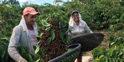 trabalhadores-colhem-cafe-em-s-o-gabriel-da-palha-espirito-santo.jpg