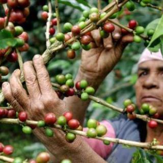867_guatemala-entre-os-maiores-paises-produtores-de-cafe-do-mundo.jpg