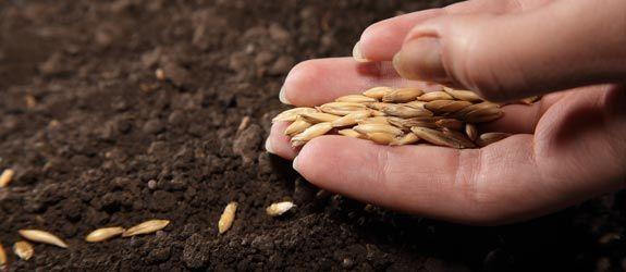 plantio sementes