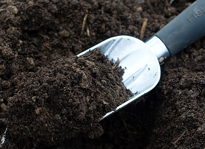 soil fern