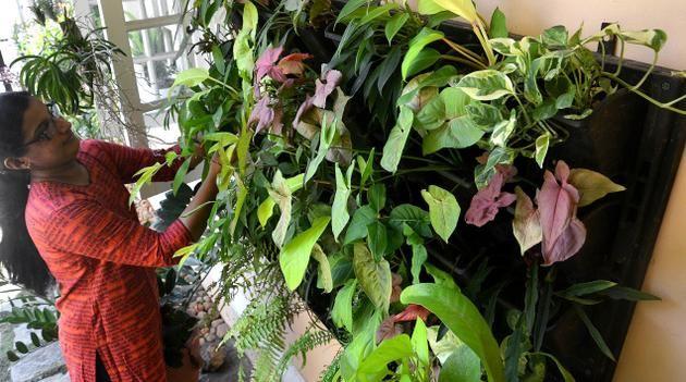 plantas vertical