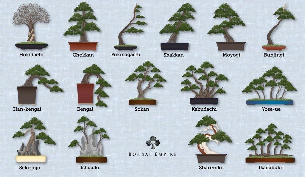 estilos bonsai
