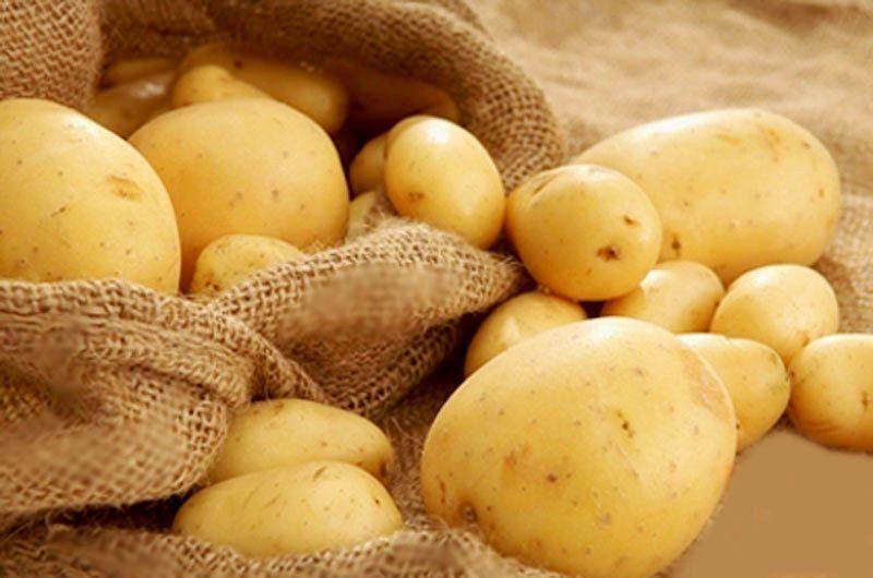 batata semente