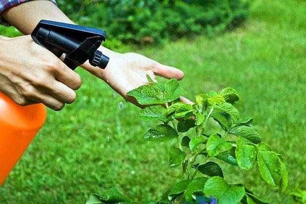 adubacao foliar