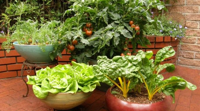 vasos vegetais