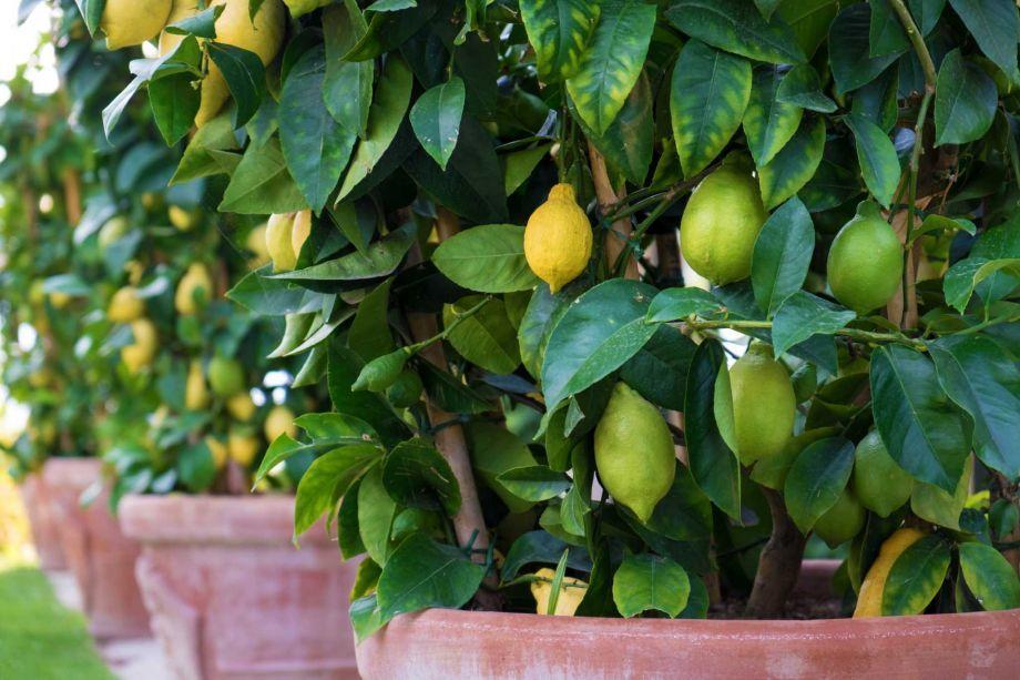nutricao frutas