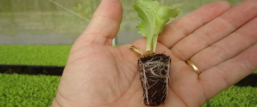 fibra hortaliças