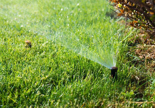 irrigação pos plantio
