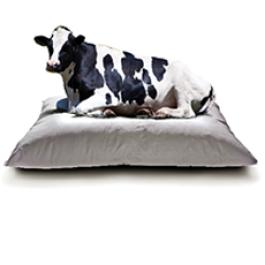 Manejo Racional de vacas de Leite