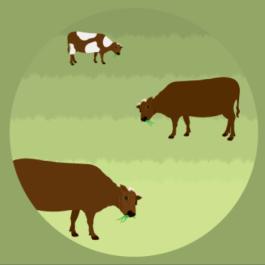 Guia da carne bovina produzida a pasto