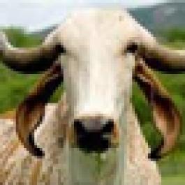 Fazenda Granja Axé Agropecuária, Jequié-BA