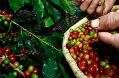 BDMG amplia desembolsos e fomenta indústria do café em Minas /Divulgação/Emater-MG