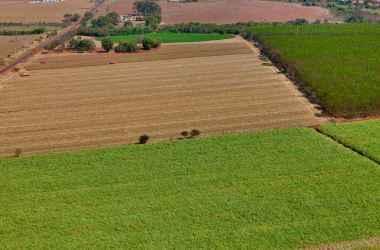 Com 930 mil hectares plantados, Minas Gerais tem 34 usinas de açúcar e álcool, que serão ampliadas para 36 em 2020. Nos últimos anos, 80 foram fechadas no país e 11 no estado (foto: TADEU FESSEL/DIVULGAÇÃO)