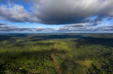 O Brasil foi o país que perdeu mais superfície de florestas primárias, à frente da RDC e da Indonésia. Foto: Mauro Pimentel / AFP