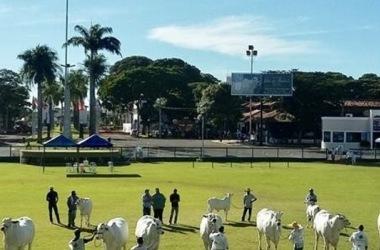 O Parque de Exposição Fernando Costa, em Uberaba, sedia a 85ª edição da Expozebu / Divulgação/Seapa