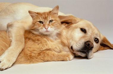 No Brasil, 44,3% dos domicílios possuem pelo menos um cachorro e 17,7%, um gato