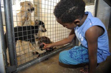 Resolução caracteriza crueldade, abuso e maus-tratos contra animais