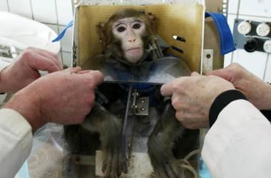 Os animais têm consciência de seu sofrimento?
