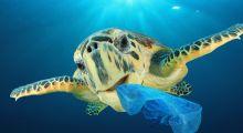Poluição dos oceanos por plástico custa ao mundo US$2,5 trilhões por ano