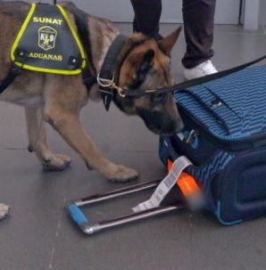 Cães farejadores detectam substância estranha na série Aeroporto desta segunda (1º)